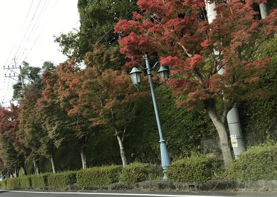 blog_oshirase_kouyou_kirishima2