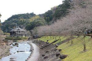 blog_2017sakurakaikayosou3